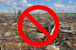 No alla deforestazione